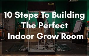 10 Steps To Building The Perfect Indoor Grow Room