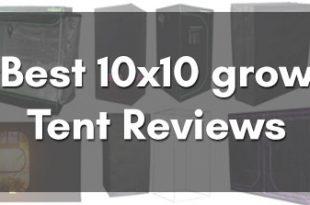 10x10 grow tent