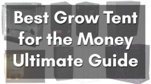 Best Grow Tent For The money
