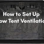 How to Set Up Grow Tent Ventilation?