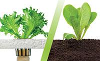 Soil or Hydroponics