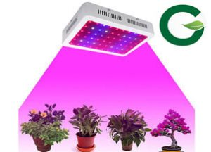 Why should you use LED Grow Lights