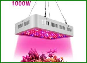 Wisful Led Grow Light 1000w Review