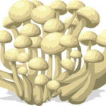 Growing Mushrooms in Grow Tent - Best Grow Tents for Mushrooms