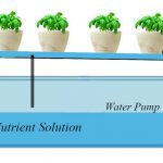 Ebb and Flow Hydroponic System - How Does It Work?