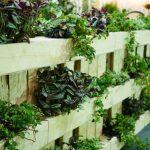 Indoor Hydroponic Herb Garden Types, Benefits & Setting It Up