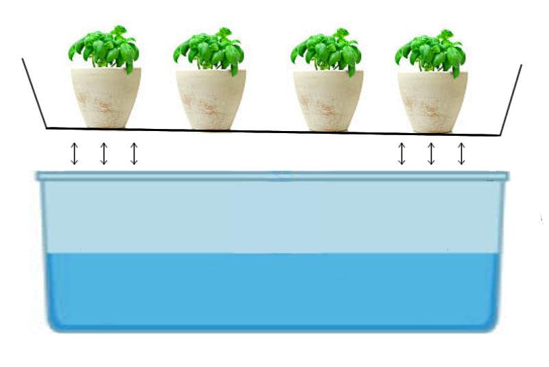 Passive sub-irrigation Hydroponic System