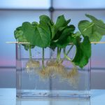 All Hydroponic Systems Types Described & How They Work