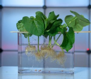 Types of hydroponic systems and how they work
