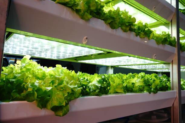 hydroponics-at-home-benefits