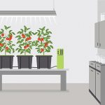 What are the Benefits of Hydroponics?
