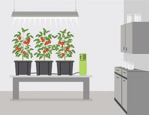 hydroponics-benefits