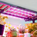 Best 6 Grow Lights For Greenhouse - Why We Loved Them?