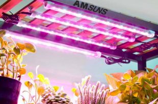 Amsuns 60W 24H Cycle Timing Auto On-Off 2 Working Times Each Day Grow Light Strip