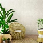 10 Best Plants For Indoor Garden. Why Are They So Special?