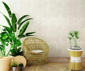 Best plants for indoor garden