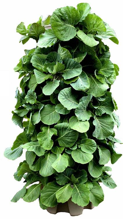 Huge GreenStalk 5 Tier Vertical Garden Planter with Patented Internal Watering System