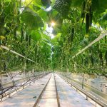 Is Hydroponics Organic? - The Key Facts