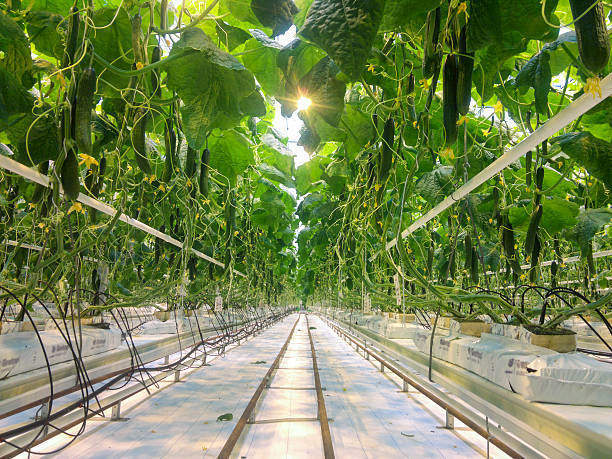 Positive Effects of hydroponics on the environment
