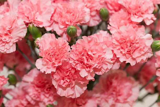 DIANTHUS DEADHEADING When And How Should You Do It