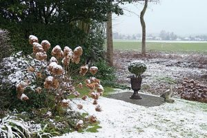 How to take care of Hydrangeas in the Winter