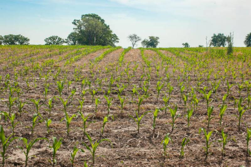 Components, pros and cons of no-till farming