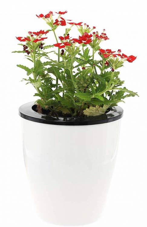 DElf 6 Pack 4.7 Inches Self Watering Planter Wicking Pots for Indoor