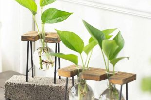 Common Issues in Growing Hydroponic Coffee