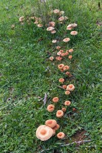How to Treat a Yard Against Mushrooms