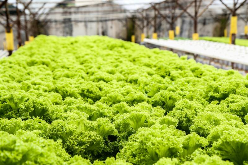 Hydroponic Farm Startup Cost – All You Need To Know
