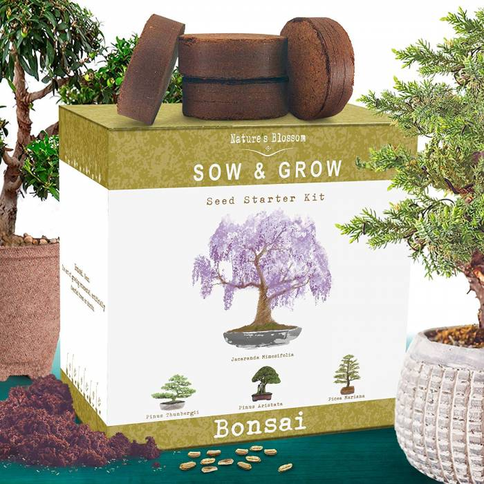 Nature's Blossom Bonsai Tree Kit. Grow 4 Types of Miniature Trees From Seed