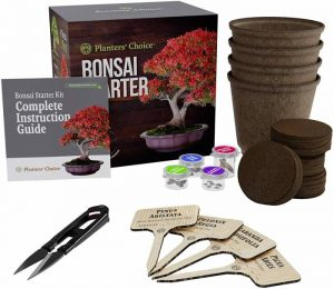 Planters' Choice Bonsai Starter Kit The Complete Growing Kit to Easily Grow 4 Bonsai Trees from Seed