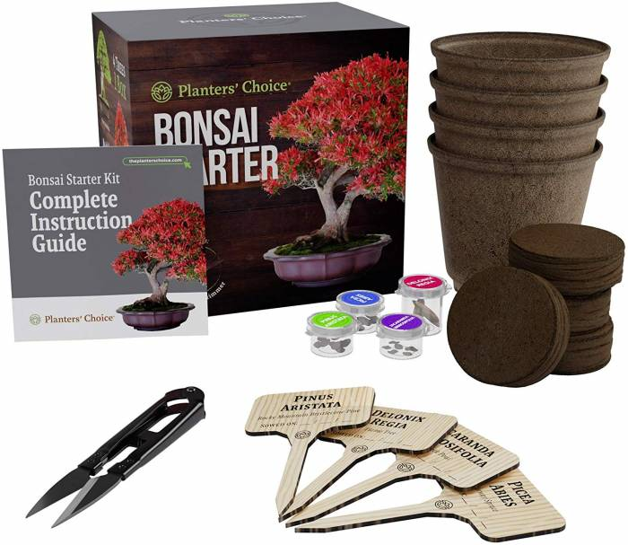 Best 6 Bonsai Tree Starter Kits Why Are They Perfect For Beginners