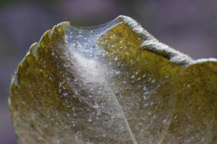 SPIDER MITES ON BONSAI TREE WHY AND HOW TO GET RID OF THEM