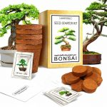 Best 6 Bonsai Tree Starter Kits - Why Are They Perfect For Beginners?