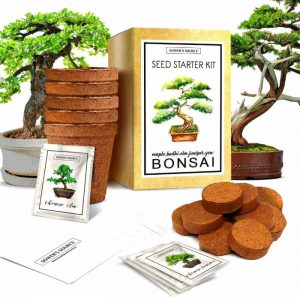 Sower's Source Bonsai Tree Starter Kit Indoor and Outdoor Beginner Seed Kit