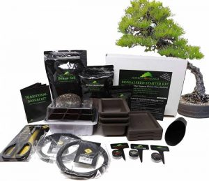 Superfly Bonsai Traditional Bonsai Seed Growing Kit Japanese Wisteria, Japanese Black Pine, Dawn Redwood