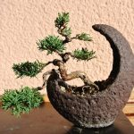 Watering Bonsai While Away Or On Holiday - Guide