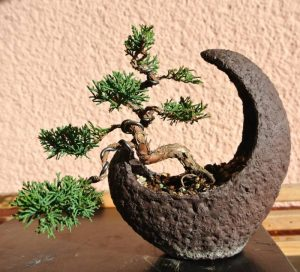Watering Bonsai While Away or On Holiday
