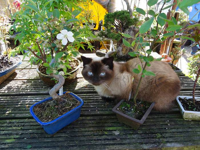 bonsai tree and cats – all you need to know