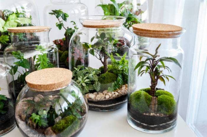 BONSAI TREE IN TERRARIUM ALL YOU NEED TO KNOW