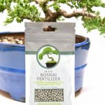 Best 6 Bonsai Tree Fertilizers (Review) - Gardeners' Top Choice