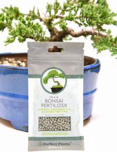 Bonsai Fertilizer Pellets by Perfect Plants 5 Year Supply All Natural Slow Release Extended Enrichment for All Live Bonsai Tree Types