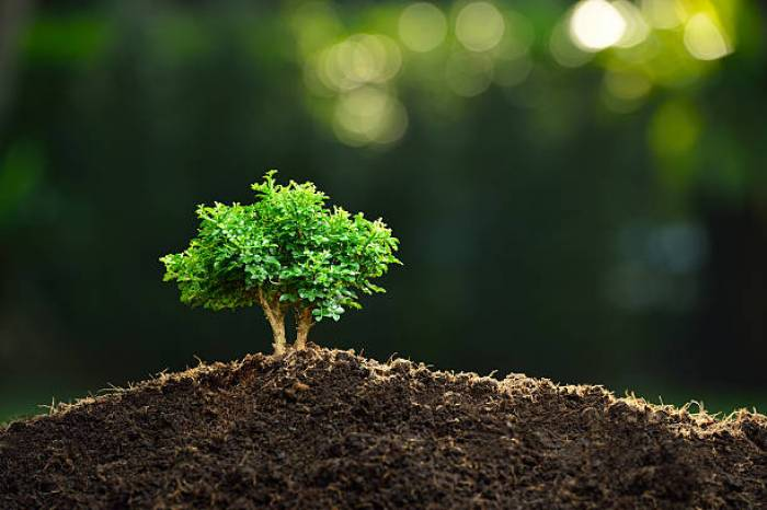Can You Plant Bonsai Tree In The Ground All You Need To Know