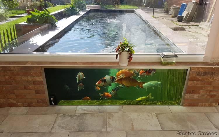 Koi Pond Glass – All You Need To Know About Pond Window