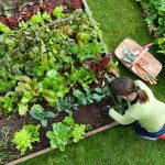 Can You Put A Raised Garden Bed On Grass? - Gardener's Guide