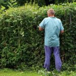 Can I Cut My Hedge On My Neighbor's Side?