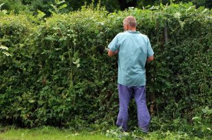 Can I cut my hedge on my neighbor side