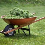 Are Grass Clippings Good For Your Chickens?