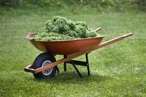 A red wheelbarrow on a lawn with fresh grass clippings in summer.